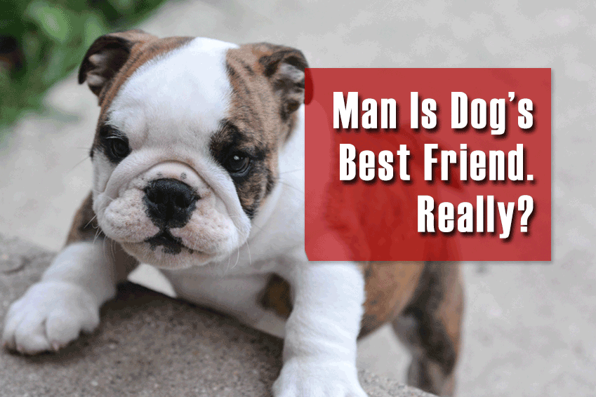 Man is Dog's Best Friend. Really?