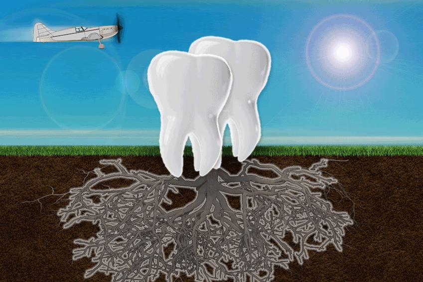 Teeth Cloning